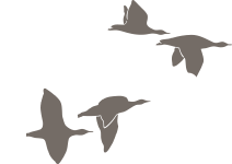 Broedkorf Logo